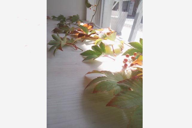 「ハナ・キノミ」展示風景・落ち葉