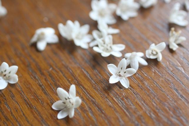 トラノオの花