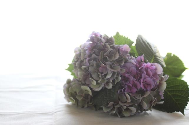 アトリエレッスン・紫陽花リース