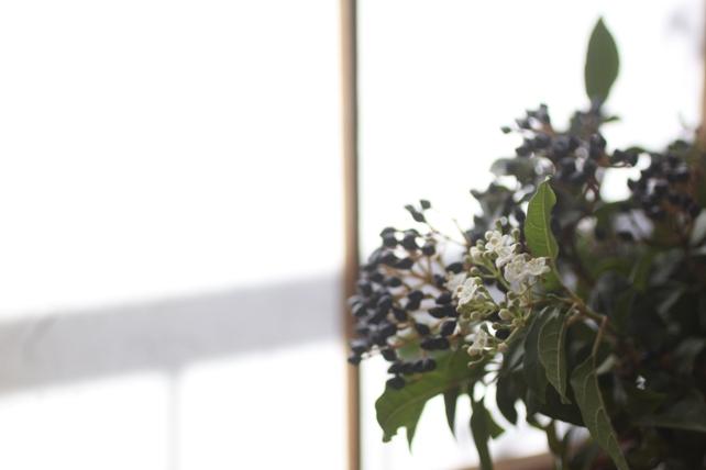 ビバーナムティナスの花