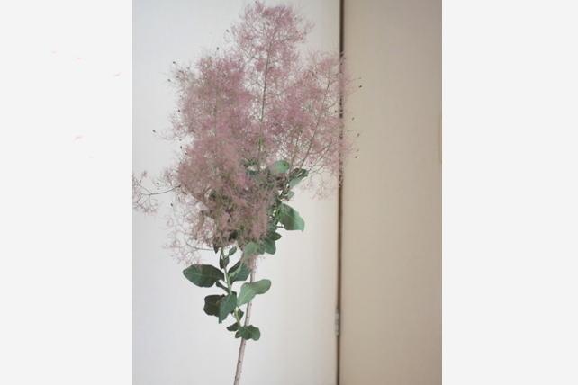 ワークショップ・紫陽花とスモークツリーのスワッグ・2016年6月2