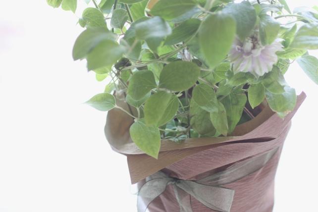 クレマチス鉢