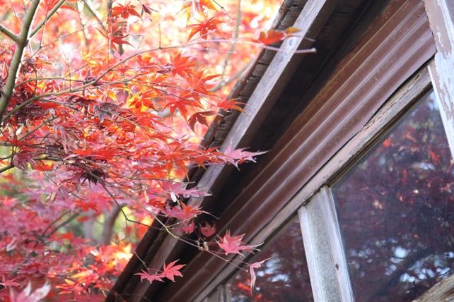 ワークショップ風景・針葉樹とコットンのスワッグ5